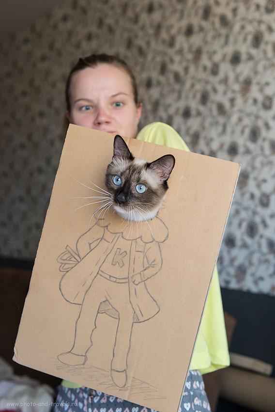 Фотография 20. Бек-стейдж фотосессии с кошками в домашней студии...