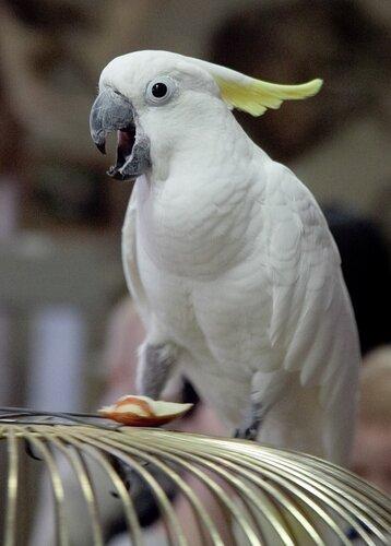 Птица разная 0_5b0cc_a9debc4c_L