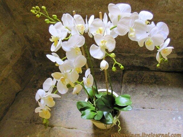 цветы орхидея природа белая Сантьяго-де-Компостела Испания