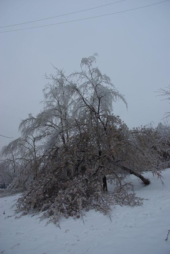 Сильное обледенение деревьев.