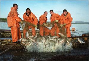 Сахалинские рыбаки ставят рекорды путины на Итурупе