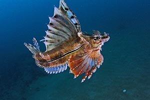 Хабаровчане увидят уникальный подводный мир Японского моря