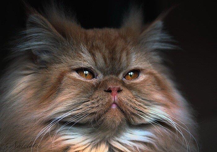 котята Натальи Кузнецовой
