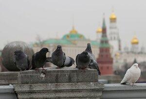 С видом на кремль
