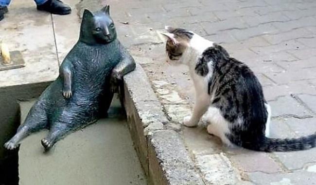 © Anadolu Kedisi / facebook.com  Скульптура Томбили теперь всегда будет напоминать людям, что