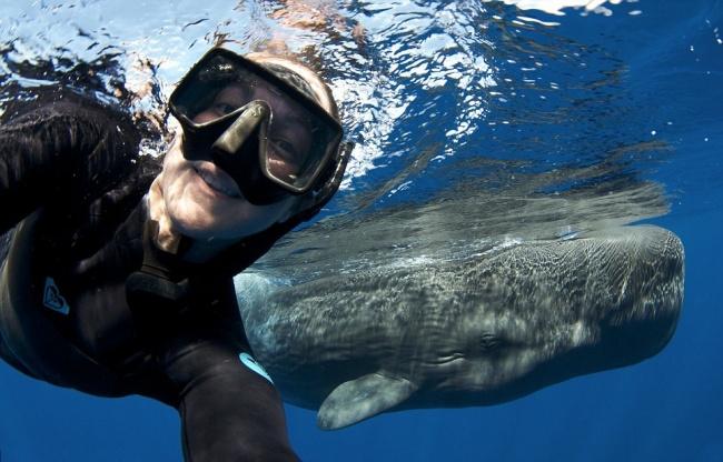 © acottonphoto  Авот снимок скашалотом отпрофессионального подводного фотографа.