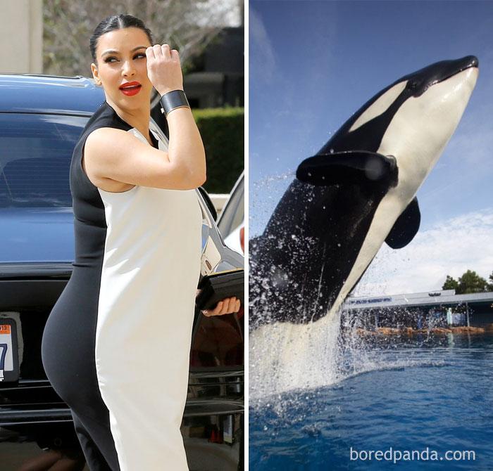 Ким Кардашьян или дельфин-касатка?