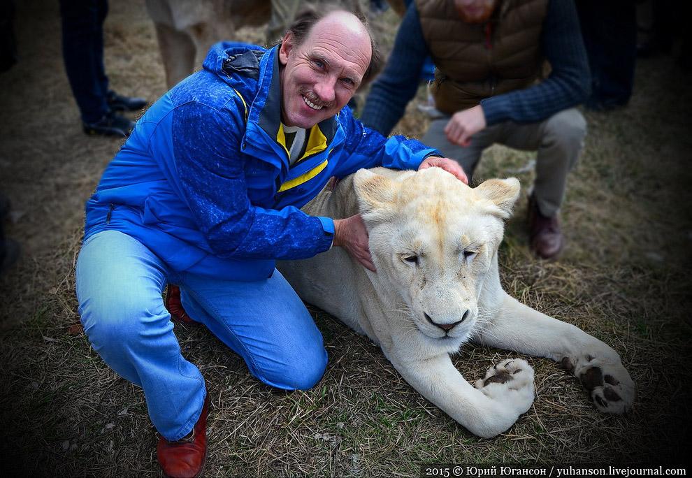 А я хотел ещё и с этим добрым львом