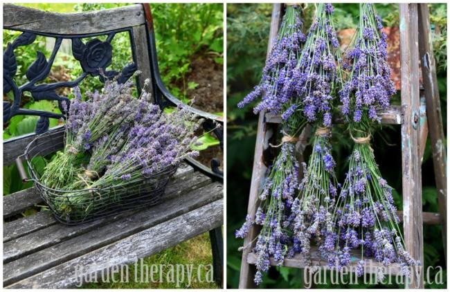 Засушенная лаванда нетолько украсит сад, ноивесь год будет напоминать отеплом лете. Превью: Dort