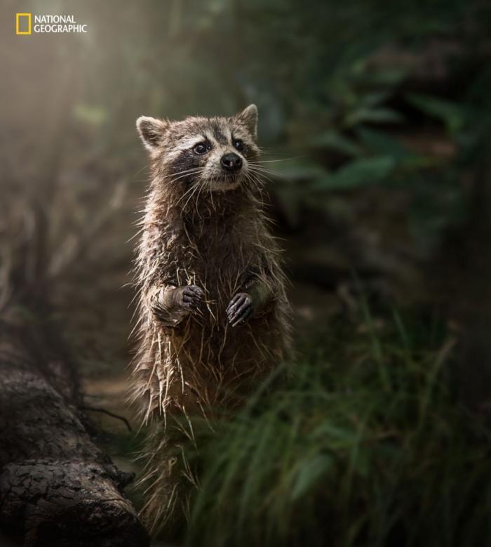 фотографии с конкурса National Geographic