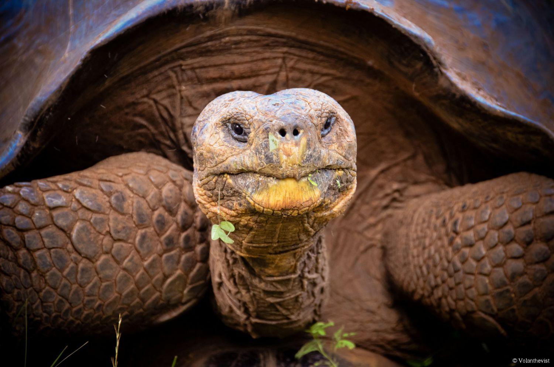 977-la-tortue-des-galapagos-balade-son-1500x0-1.jpg