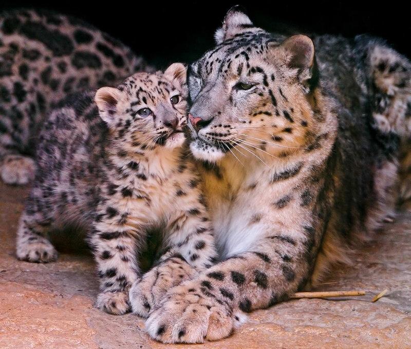 Мамы с детенышами. Фотографии