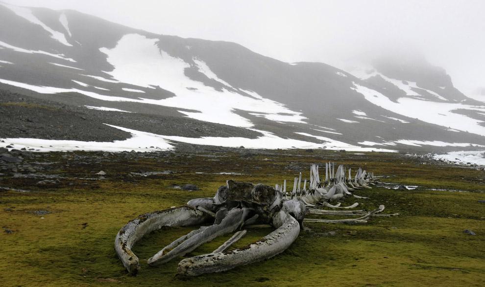 16. Размноженный айсберг. Это фата-моргана — редко встречающееся сложное оптическое явление в атмосф