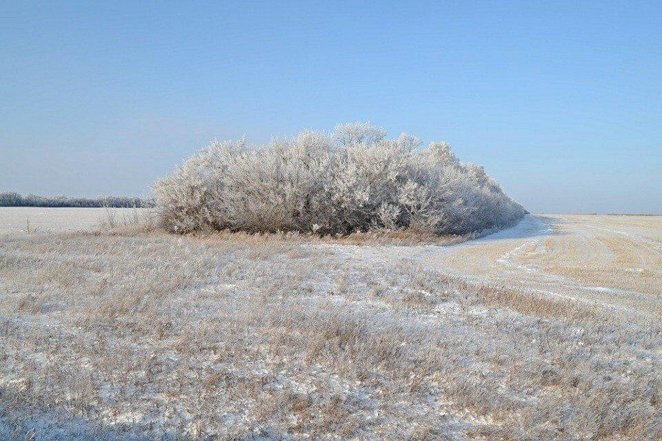 зимние кустарники