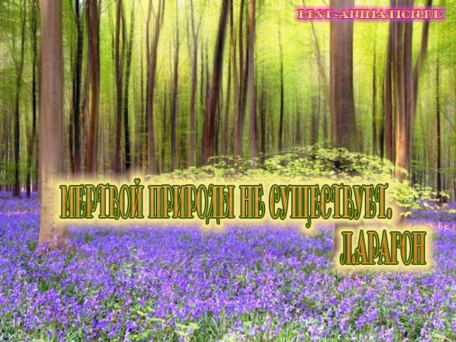 Цитаты великих людей - Сила природы, Красота природы – Мертвой природы не существует...