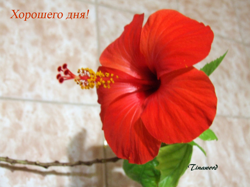 цветок-0.jpg