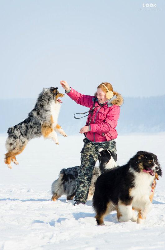 Мои собаки: Зена и Шива и их друзья весты - Страница 8 0_a83a7_affcb4a_XL