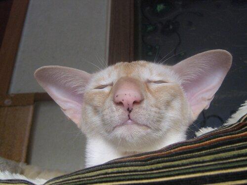 У кота на небе темные пятна