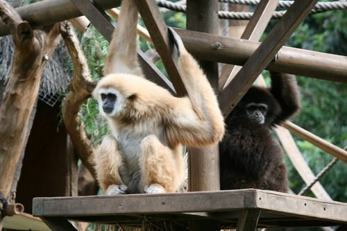 Тенерифе, обезьяны в Джангл Парке