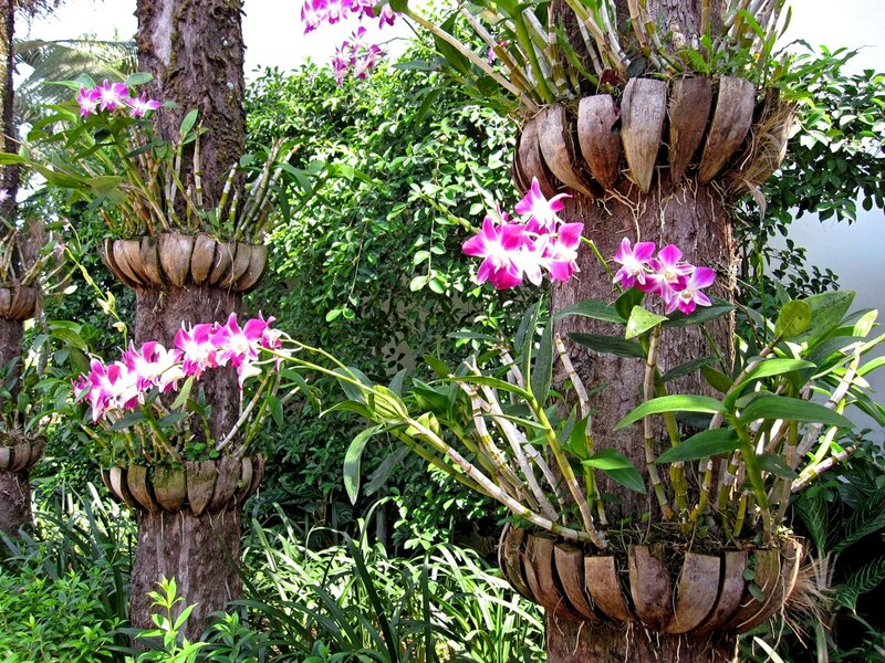 Орхидеи на деревьях