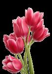 http://img-fotki.yandex.ru/get/5802/ladyo2004.34/0_4c55f_411e5929_S.jpg
