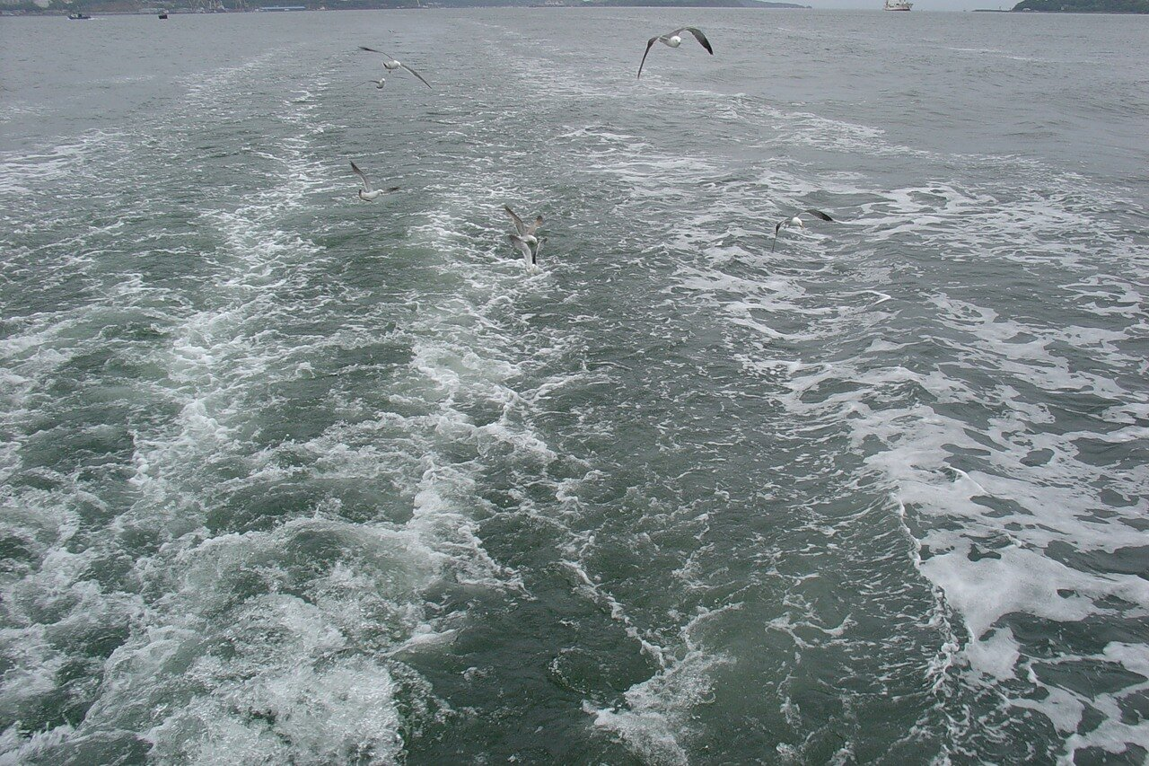 Владивосток. Акватория. море и чайки, Vladivostok. Water area. sea and seagulls.