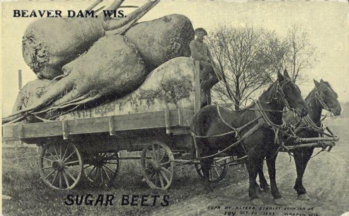 старинные фото открытки