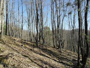 Лес предновогодний