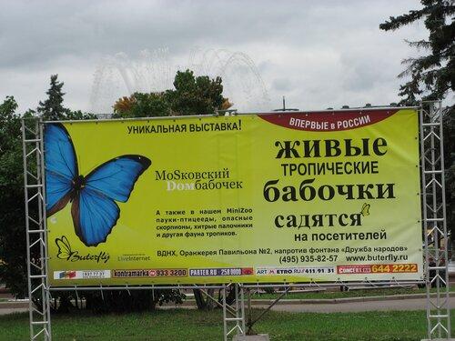 http://img-fotki.yandex.ru/get/5802/vashakukla.f/0_4d806_9c97a168_L.jpg