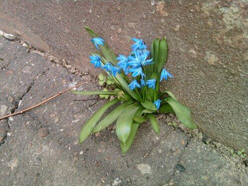 Весна идёт, весне дорогу!