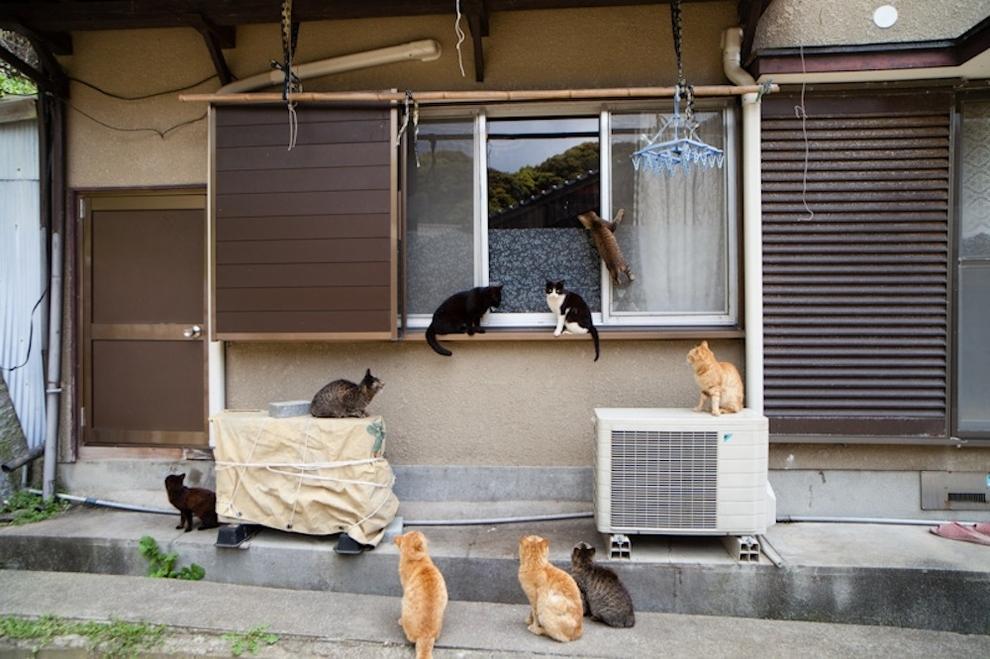 Фото 34 - Кошачий рай в Японии