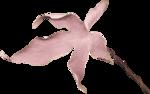 «Dreamin Pink» 0_99afd_810ef165_S