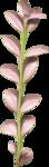 «Dreamin Pink» 0_99b28_bdb9c1d3_S