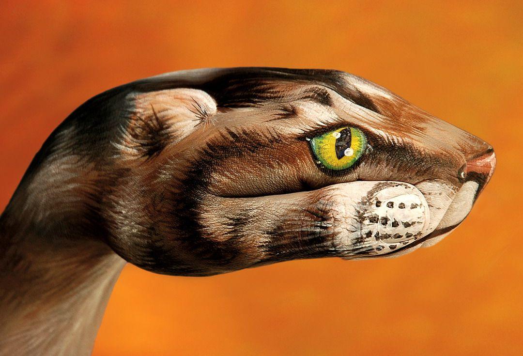 Животные из рук от Guido Daniele