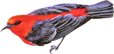 Bird13_dhedey.png