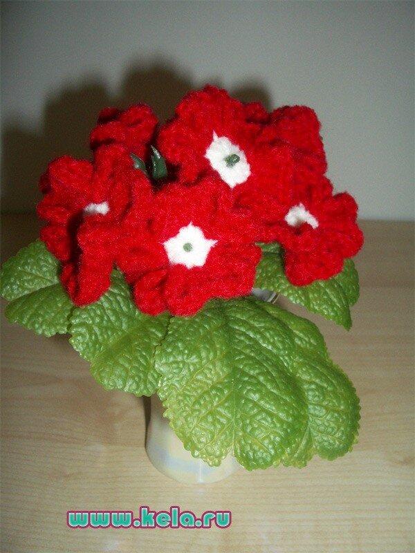 Вербена красная цветы в горшках.