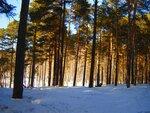 лес на учительской