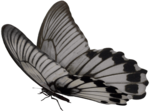 SD NP BUTTERFLY 3.png