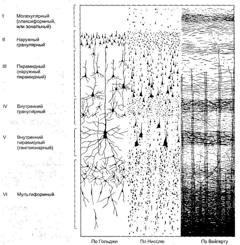 Нужно заметить, что нейроны