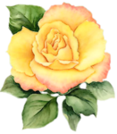 yellowrose026_mc.png