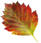 MPD_Lovely_Fall_ Arrangement_leaf19.png