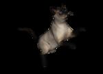 сиамские кошки (12).png