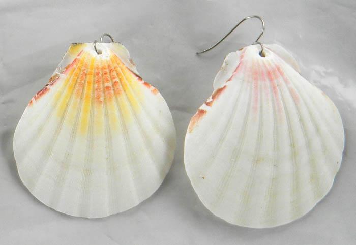 простые сережки из раковин моллюска ГРЕБЕШОК (пектен) и ювелирной проволоки белого металла