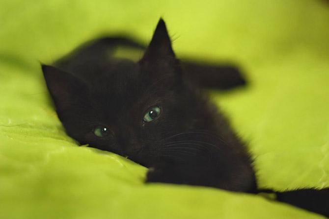кошки - врет и не краснеет