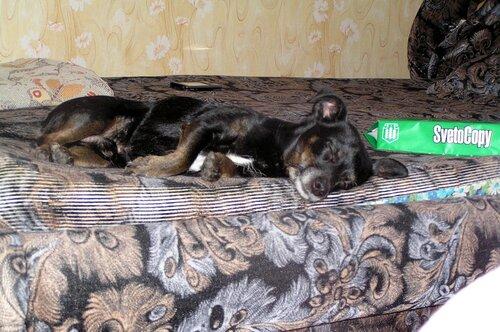Спит усталое зверушко