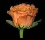 «doniar-HappySpring-pELEMENTY» 0_54fd7_ab4fa845_S