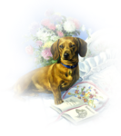 Собаки  0_57c89_498ab225_S