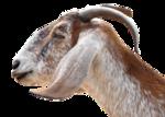 Животные 5 0_5f074_adb8fa3f_S