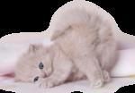 Кошки 5 0_50a01_ac57c8c5_S