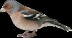 Птицы  разные  0_51c51_61c3921b_S